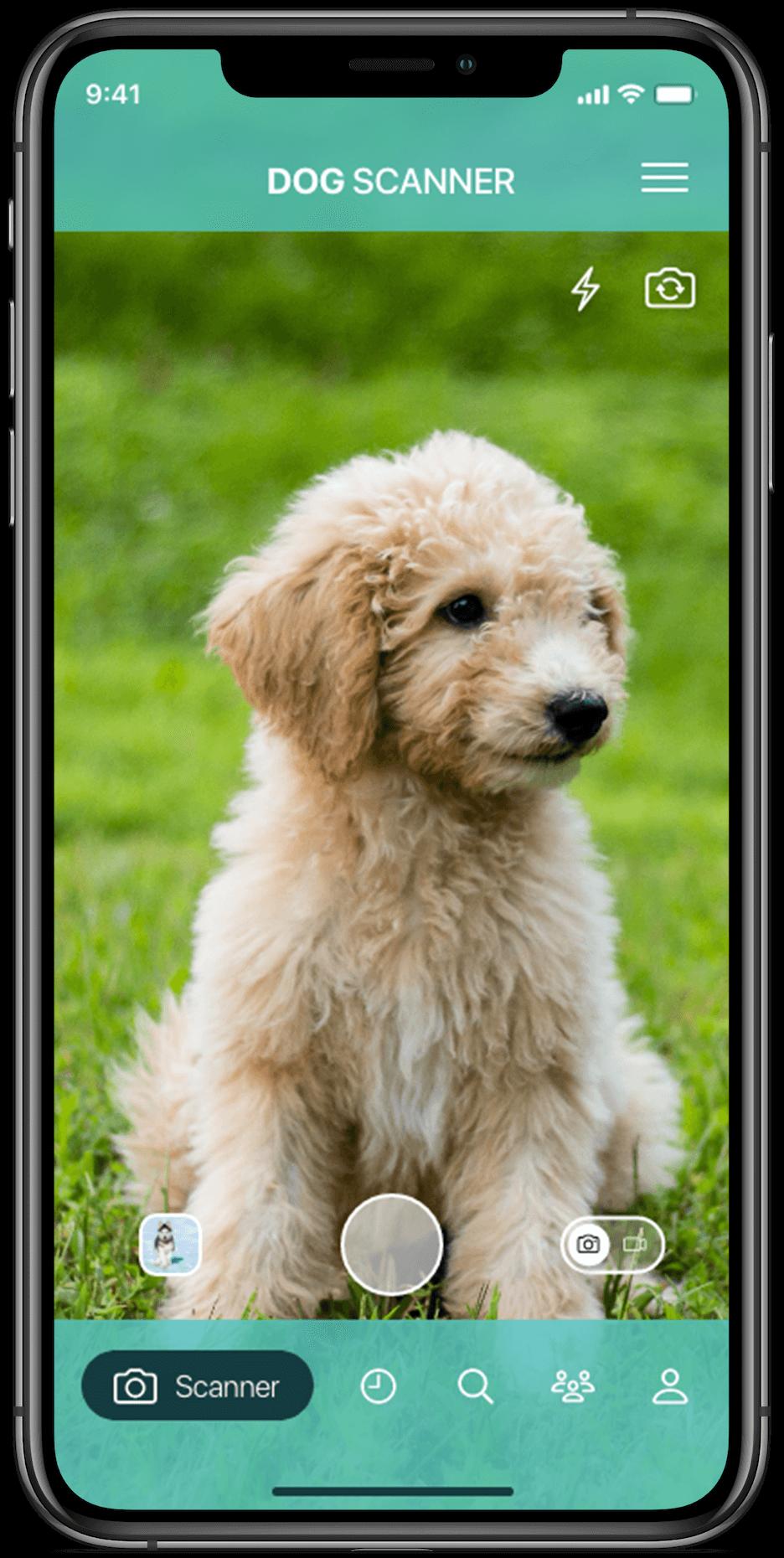 Identificeer hondenrassen