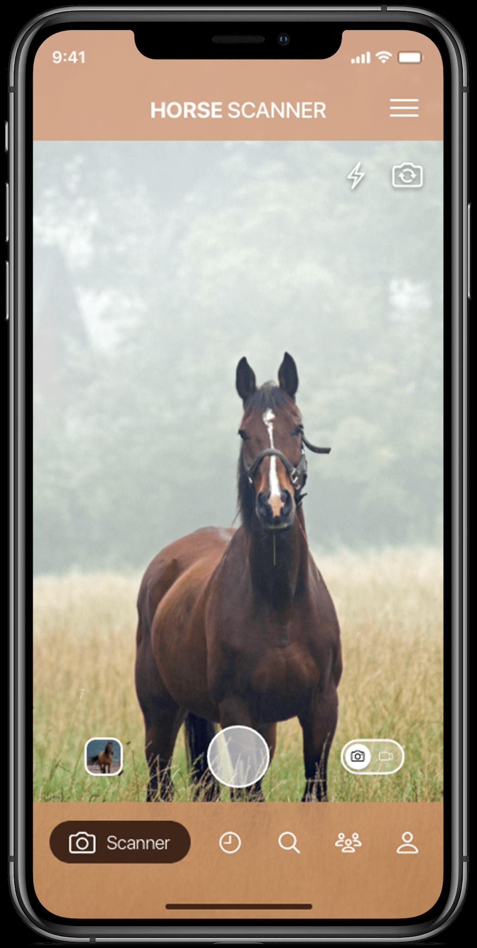 Identificeer paardenrassen