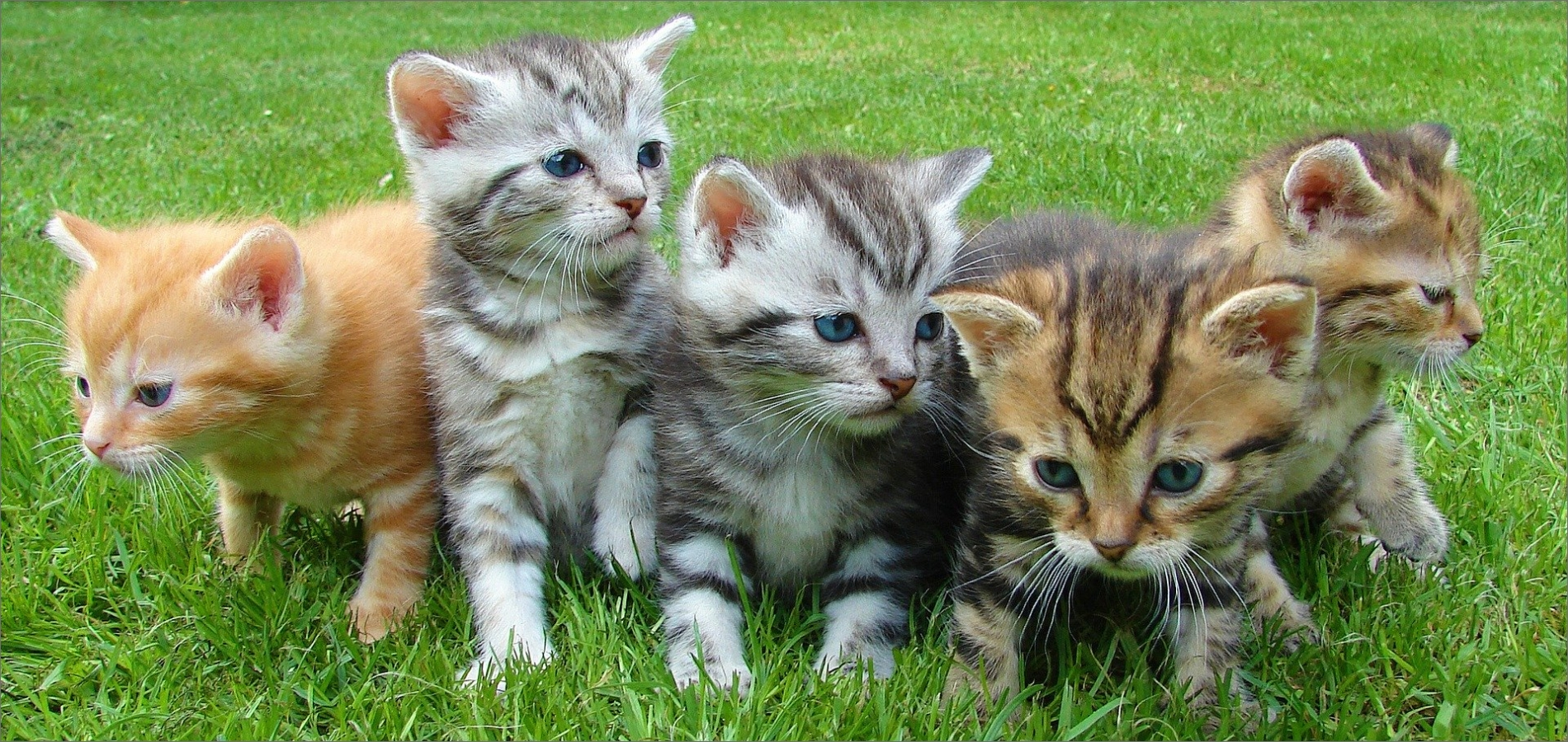 all-cat-breeds-and-more